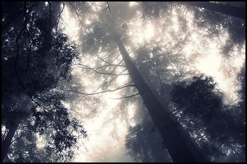mist canada tree nature fog forest bc britishcolumbia trail northvancouver conifer mountseymour perimetertrail mountseymourprovincialpark olympusep1 panasoniclumix20mmf17