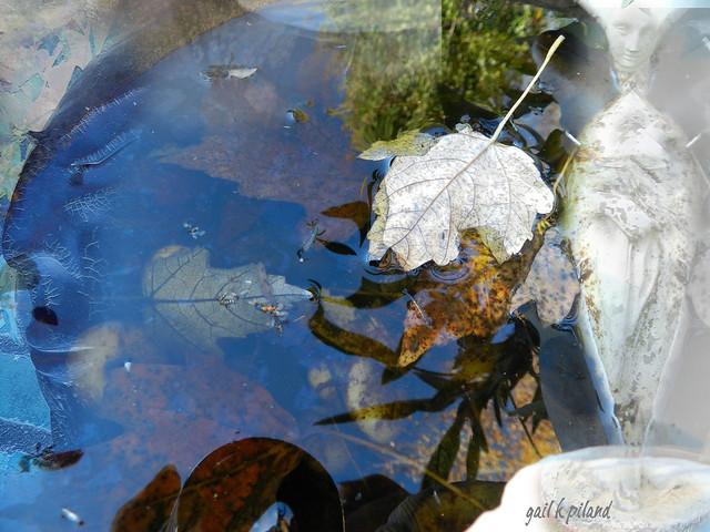 Water & Sky & Leaves-Nov, 11-2011