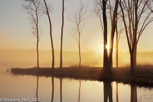 mist fog sunrise illinois frost preserves lakecounty foggyscenes halfdayforestpreserve lcfpd halfdaypond