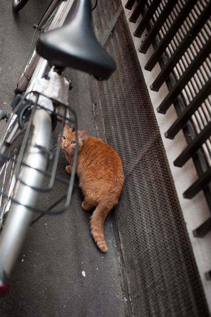 猫 2012/03/20 DSC_3762