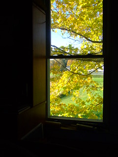 office view in fall   by Andrea_R