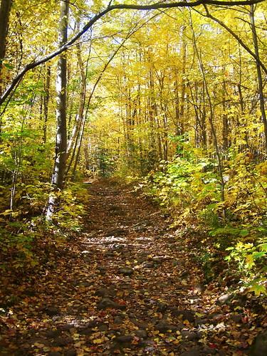 old mountain woods lyon trail following andyarthur
