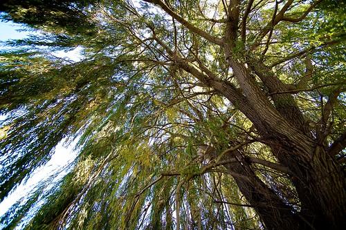 park tree fall michigan detroit willow belleisle uploaded20111026
