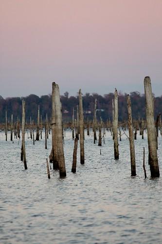 sunset lake landscape texas tx stumps
