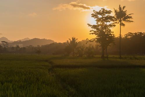 java indonesia asia borobudur ricepaddies sunset canon landscape mountains