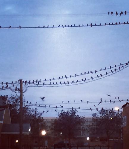birds morning earlybird early blue lubbock lubbocktexas sky sunrise