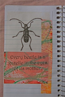 Every beetle...