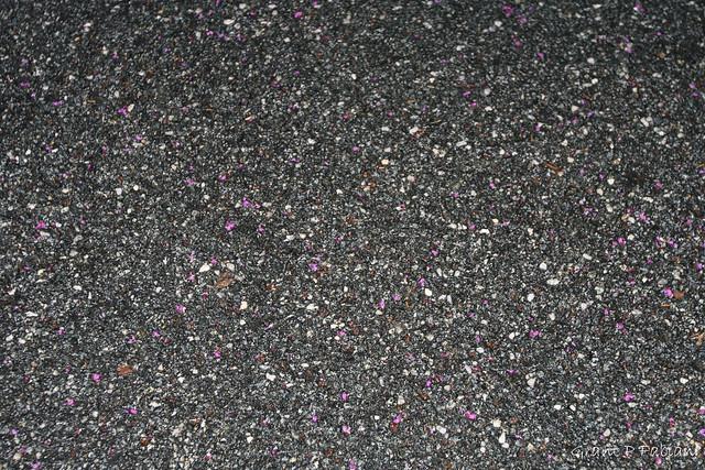 Texture - (Mr Car Park with Petals)
