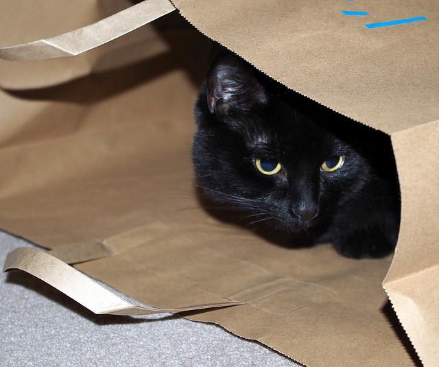Flic in a bag.