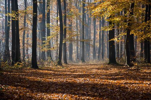 autumn trees leaves forest hungary ősz erdő fák