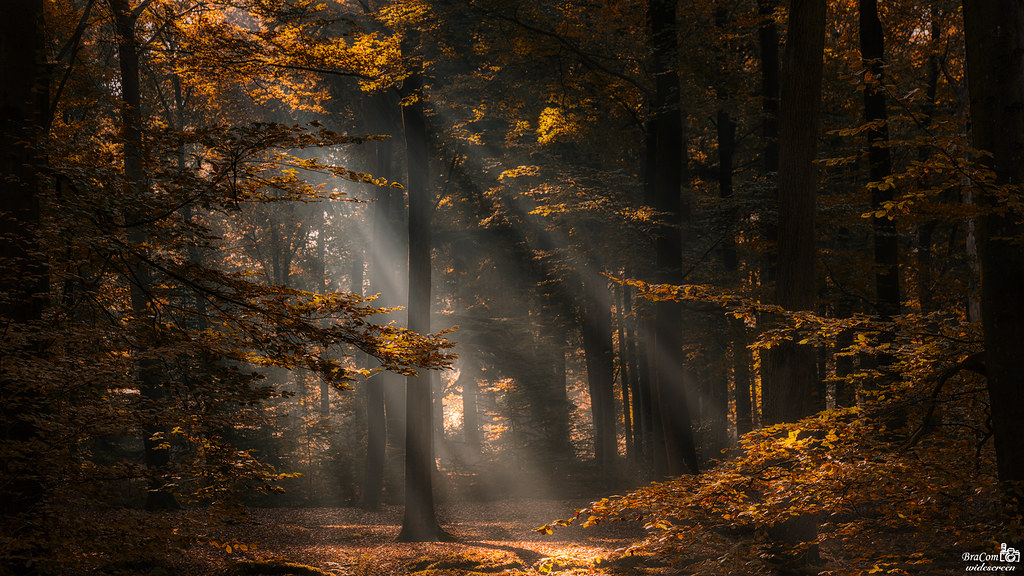 October 2016 Sun Rays in the Forest