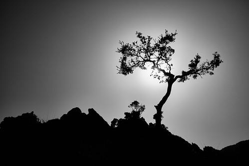 sunset blackandwhite sun plant tree monochrome silhouette backlight rocks kreta greece fujifilm schwarzweiss griechenland sonne baum gegenlicht felsen κρήτη x100t