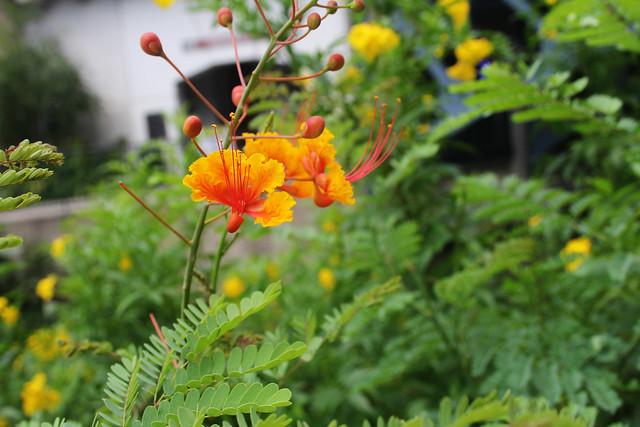 Riverwalk Flowers