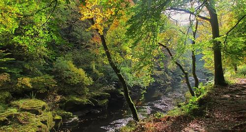 woods strid wharfe dalesway oaksandbeeches