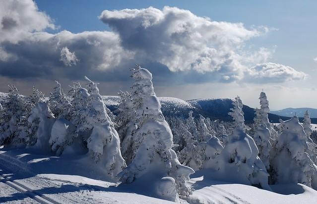 Jeseníky - Jelení hřbet a Břidličná hora