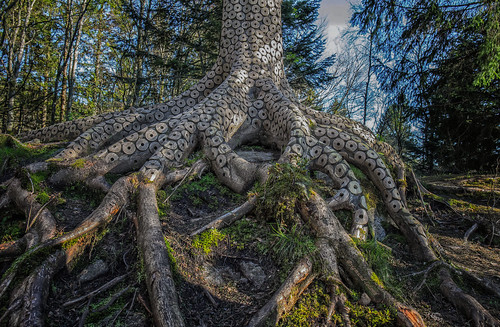 old trees decorations sky colour tree green art nature colors norway fairytale forest canon landscape photography eos photo amazing artwork europa exposure flickr foto artistic outdoor details tripod natur picture roots norwegen exhibition rings mysterious environment wald carvings fotografi 6d bilde autofocus adornments