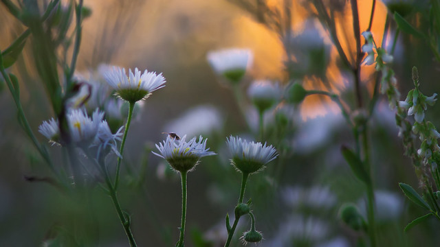 A flowery sunset...