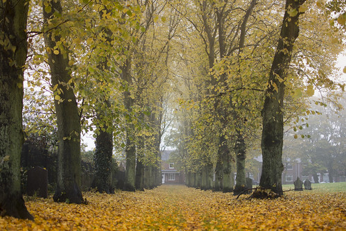 autumn trees orange mist colour tree church grave graveyard leaves weather misty fog leaf seasons durham cemetary graves countydurham shildon