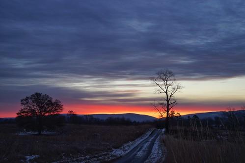 365the2017edition 3652017 day9365 9jan17 blandy statearboretumofvirginia thetree sunrise landscape
