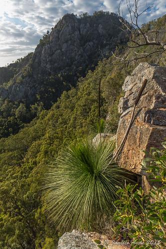 trees mountain clouds landscape rocks rocky australia ridge bushwalking qld queensland bushwalk ipswich grasstrees volcanicplug 2015 xanthorrhoea seqld flinderspeak flindersgoolmanconservationestate sonya7r
