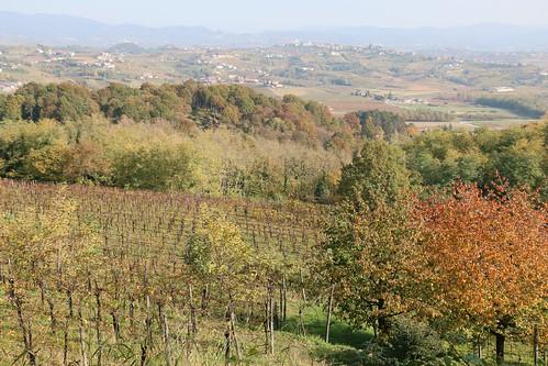 Goriška Brda (Edi Keber Winery) | by Charliban