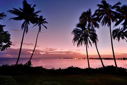 hawaii sunrise palmtrees