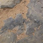 Fr, 04.09.15 - 11:47 - Fossilien als Treppenbaumaterial