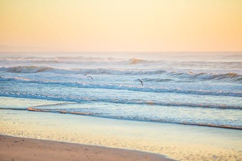 ocean seagulls bird beach birds sunrise waves pastel australia queensland noosa noosanorthshore allieca