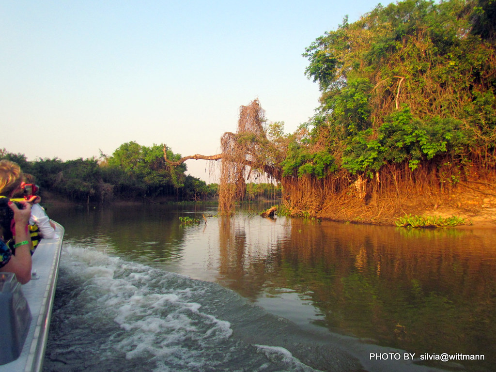 ...de barco no rio Cuiabá,  Pantanal MT , Brasil