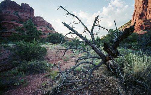 "Image titled ""Fallen Branches, Sedona."""