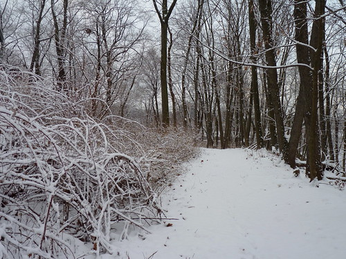 trail path trees forest snow winter valleyplaceravine ayresbeach redsmarina highlandpark middlesexcounty nj newjersey fav10