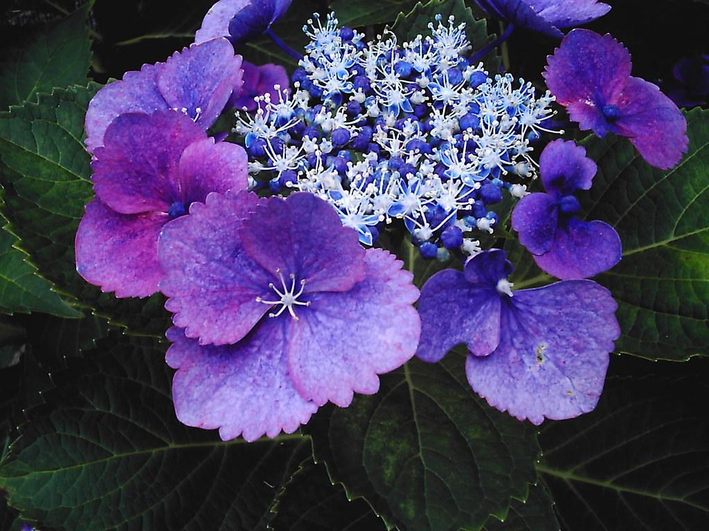 2006-05-30 14-08-00.jpg