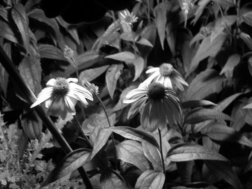 Flowers   by Eastenhuh