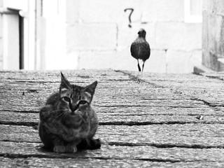 la gabbianella e il gatto | by ezra rhesus