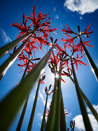 photones olympus air a01 takuma kimura 木村 琢磨 landscape scenery natural autumn amaryllis flower plant 風景 景色 自然 秋 彼岸花 花 植物 木村琢磨