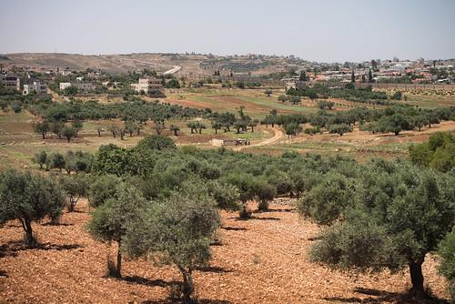 wall israel day farm palestine westbank muslim religion middleeast christian clear arab land jewish arid israeli divide olivetrees levant palestinian