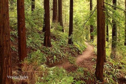 portland hoytarboretum washingtonpark or oregon pacificnorthwest redwood redwoodtrail path woods forest