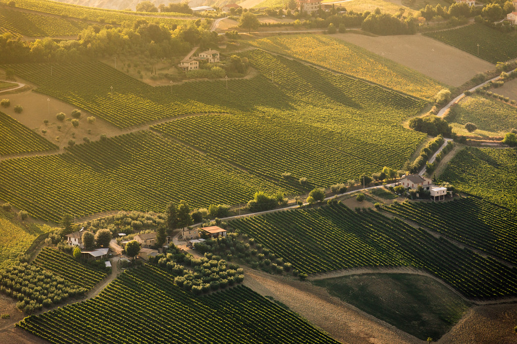 www... wine wine wine