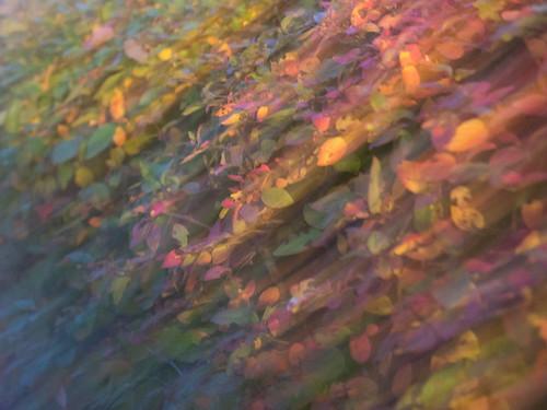 autumn-1300977 | by G Gudmundsson
