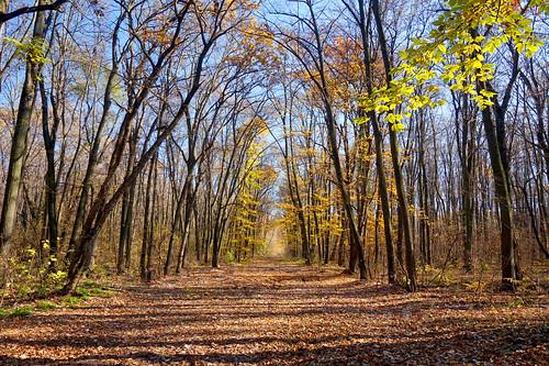 autumn fall seasons romania toamna peisaj baragan pantelimon ilfov