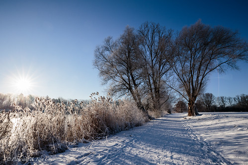nature landscape winter sun sunlight sunrise tree trees branches path cold freezing frost snow ice cristals white blue light footsteps shadow canon 6d 1635 wideanglewide angle uwa
