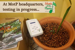 We are still in the extremely early stages of testing, but the results are quite promising. Keep checking here for details! #plantmusic Plant Perception #singingplants #nextgeneration