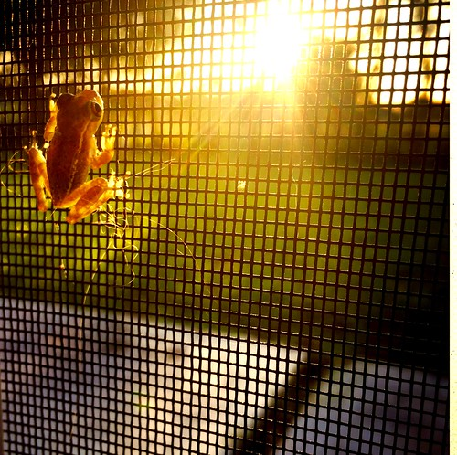 sunset florida treefrog capecoral iphone6 hipstamitic