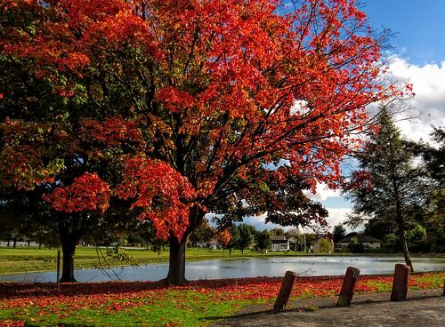 blue autumn trees red sky orange tree fall water colors beautiful grass canon geese pond colorful skies view pennsylvania relaxing ducks sunny trunk inspiredbylove amateurphotography sx50