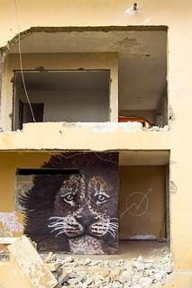 Lion | by FTonyC