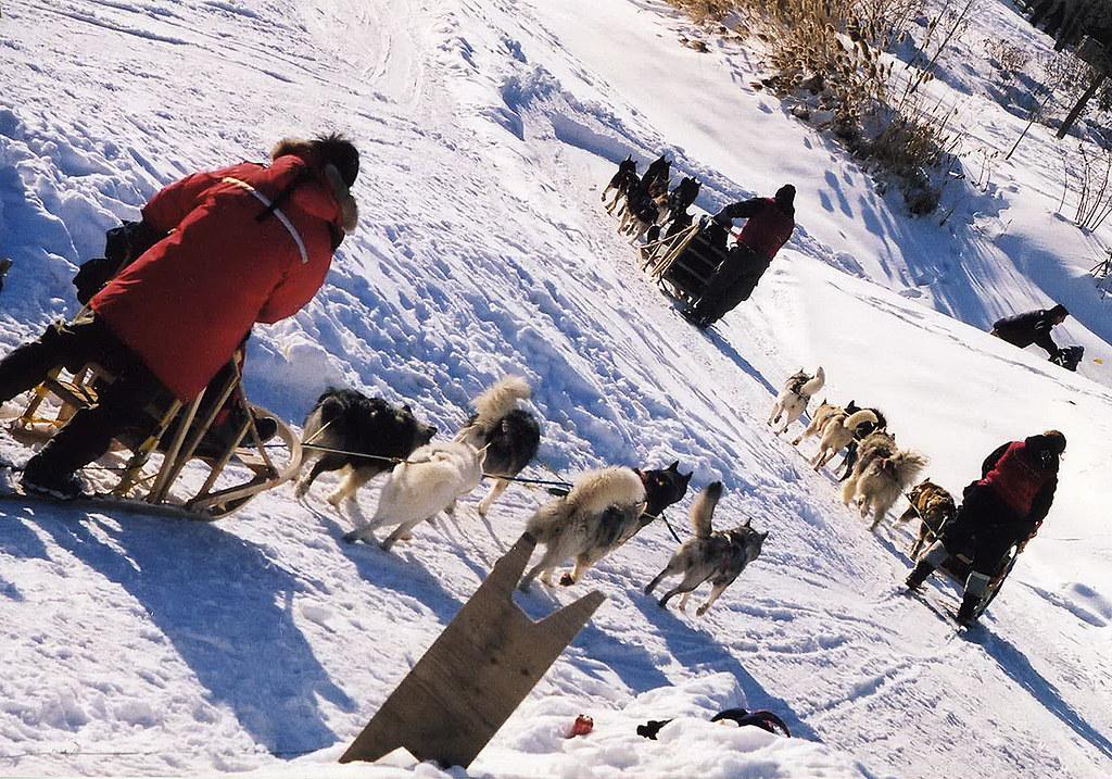 2001 janvier-fevrier parc drapeau chiens 001