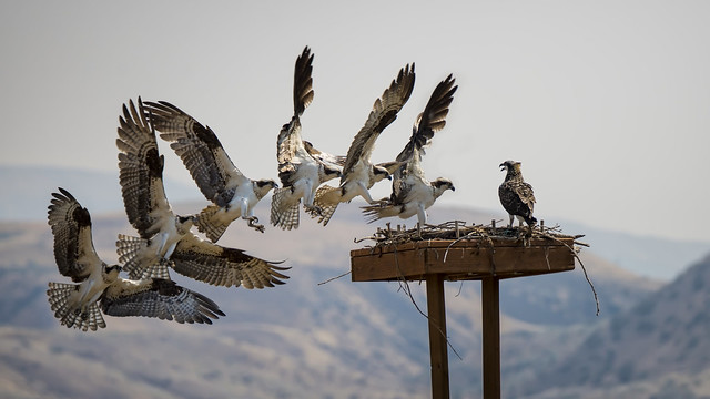 Osprey landing sequence