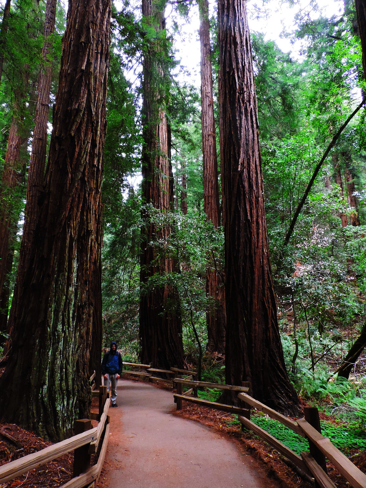 Muir Woods National Monument, CA, USA