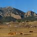 Shanahan Ranch Vista