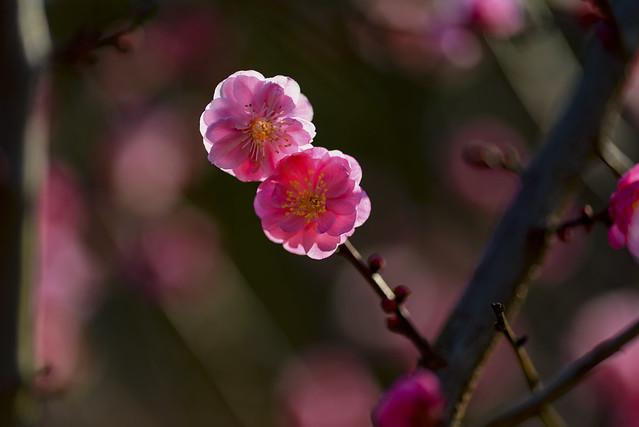 Saludando a la primavera.